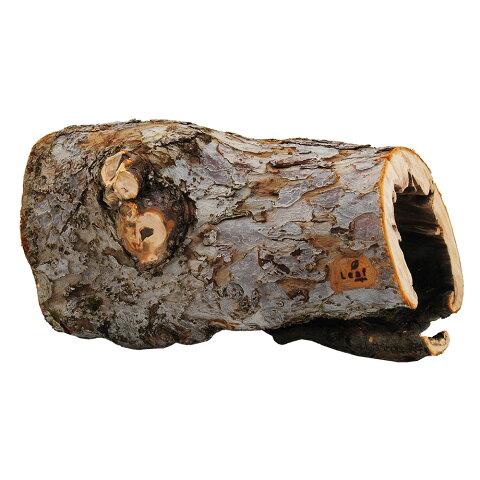 一点物 長野県小布施産 天然素材のりんごの木オブジェ AP-002 レイアウト 同梱不可 沖縄別途送料 関東当日便