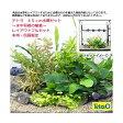 (水草 熱帯魚)テトラ 45cm水槽セット 〜水中垣根の植栽〜 レイアウトフルセット 本州・四国限定