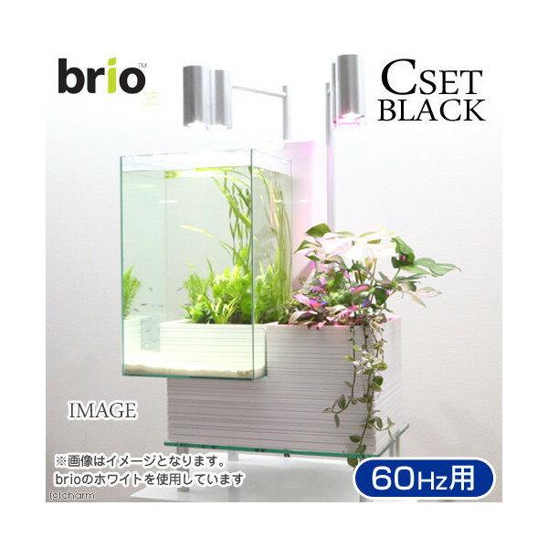 後日生体(熱帯魚) brio35 ブラック 60Hz 西日本用 Cセット 本州・四国限定:charm