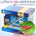 (エビ・貝)後日生体 レグラス R−300 LEDライト 水槽セット レッドファイアーシュリンプ