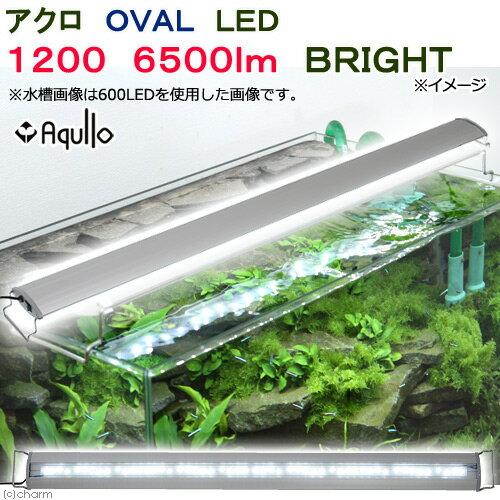 アクロ OVAL LED 1200 6500lm BRIGHT Aqullo 120cm水槽用 ライト