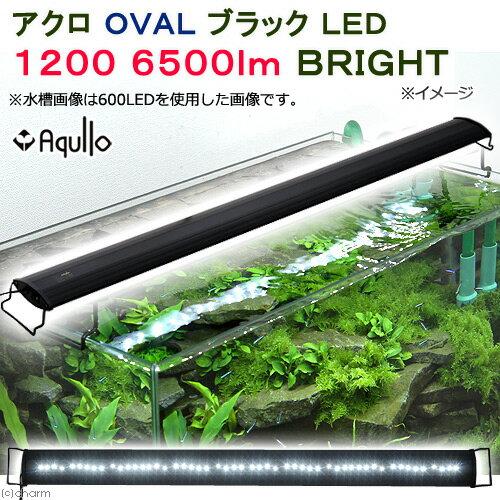 アクロ OVALブラック LED 1200 6500lm BRIGHT Aqullo 120cm水槽用