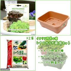 【まとめ割】 珍しい野菜を育てよう!イタリア野菜の種 レタスサラダ栽培セット(ブラウン) ...