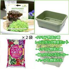 【まとめ割】 珍しい野菜を育てよう!イタリア野菜の種 レタスサラダ栽培セット(グリーン) ...