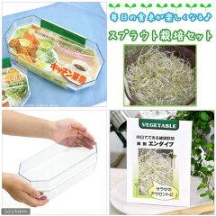 【まとめ割】 お家で新鮮な野菜を!キッチン菜園250 スプラウト栽培セット ~エンダイブ~【...