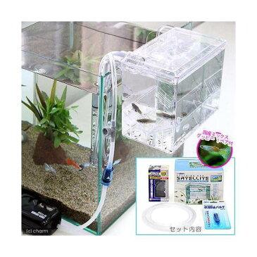 (熱帯魚)外掛式産卵飼育ボックス サテライト スターターセット 国産ミックスグッピー 1ペア 付 本州四国限定