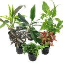 (テラリウム)おまかせテラリウム用植物 3種セット + おまかせ苔2パックセット 本州・四国限定 本州・四国限定