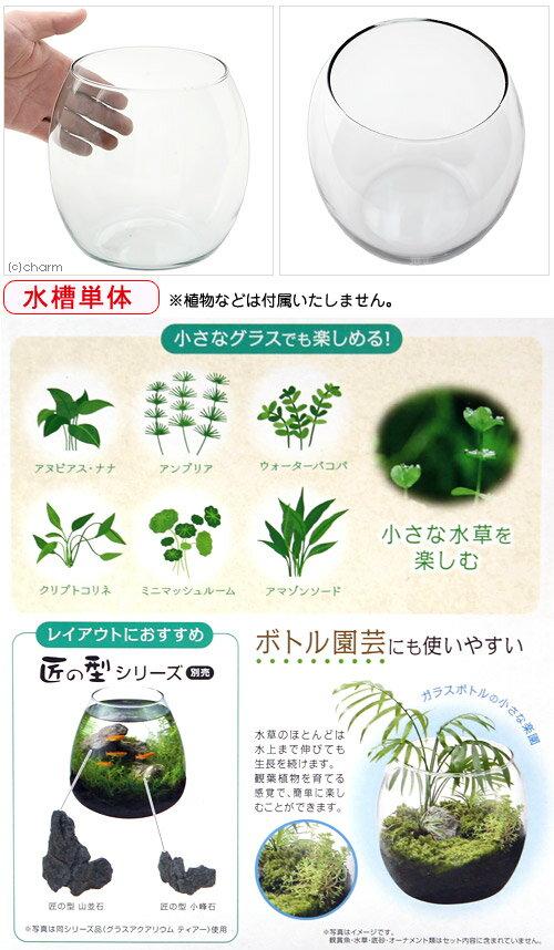ジェックス『グラスアクアリウムドロップ水草インテリアガラス製』