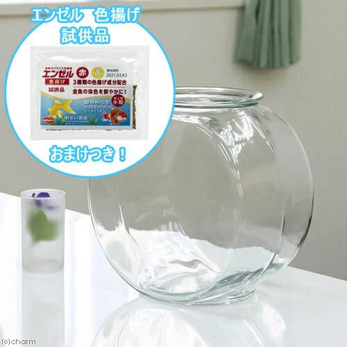 おしゃれなガラス製金魚鉢 太鼓鉢 大(7.6リットル) エンゼル 色揚げのおまけ付き