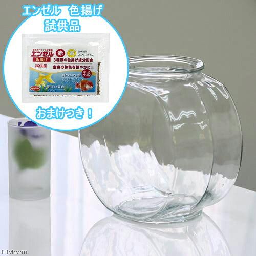 おしゃれなガラス製金魚鉢 太鼓鉢 中(3.8リットル) エンゼル 色揚げのおまけ付き