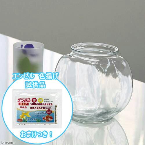 おしゃれなガラス製金魚鉢 太鼓鉢 小(1.2リットル) エンゼル 色揚げのおまけ付き