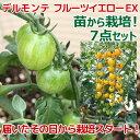 全て揃ったお買い得栽培セット!(観葉)私の菜園 〜デルモンテ フルーツイエローEX 苗から...