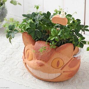 ガーデニング>インテリア>観葉植物(観葉)ジブリプランター にんまりネコバス シュガーバ...