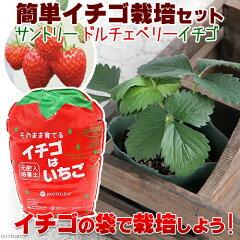 365日毎日発送 ペットジャンル1位の専門店(観葉)イチゴはいちご培養土 簡単イチゴ栽培セッ...