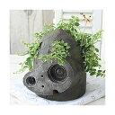 (観葉植物)ジブリプランター 天空の城ラピュタ ロボット兵の思い フィカス プミラ仕立て(植え込み完成品)(1鉢)