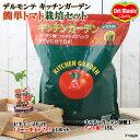 (観葉植物)デルモンテ 簡単トマト栽培セット(ビギナーズトマト)(1セット) 家庭菜園