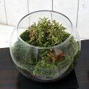 (観葉植物)苔Terrarium 和景レイアウトセット 〜白芽椹(シロメサワラ)〜 説明書付