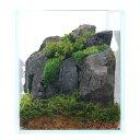 (観葉植物)苔Terrarium レイアウトキット 〜ナチュラル(風山石)〜 説明書付
