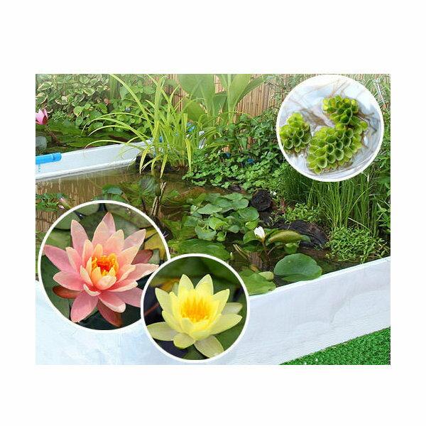 (ビオトープ/水辺植物)おまかせ水辺植物レイアウト(スイレン付)