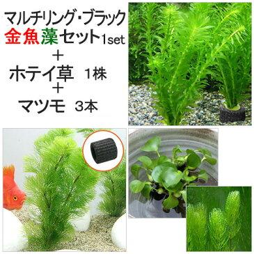 (水草)マルチリングブラック(黒) メダカ・金魚藻セット(1セット)+ホテイ草(1株)+マツモ(3本)