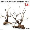 自然の景色が立ち上がる形状お任せ ブランチ流木(台座付き極上流木) 1本