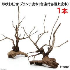365日毎日発送 ペットジャンル1位の専門店形状お任せ ブランチ流木(台座付き極上流木) 1本