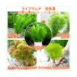 (水草)ライフマルチ(茶) メダカ・金魚藻 3100円 お買い得セット(1セット)