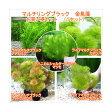 (水草)マルチリング・ブラック(黒) メダカ・金魚藻 3100円 お買い得セット(1セット)