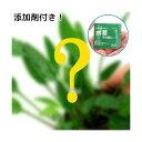 (水草)おまかせクリプトコリネ(1ポット)+水草その前に 1g(2L用) 本州四国限定