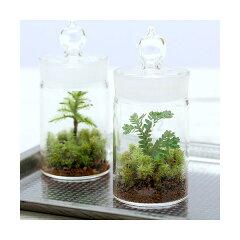 (観葉)苔Terrarium クラマゴケ ガラスボトル 説明書付 テラリウムキット