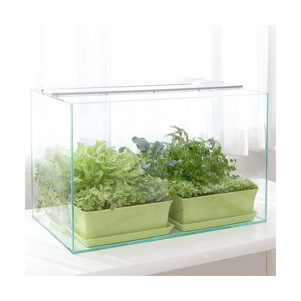 60センチ水槽 野菜栽培キット 家庭菜園 お一人様1点限り 関東当日便