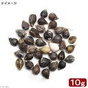 (ビオトープ)水辺植物 種子 ジュズダマの種 バラ(10g)