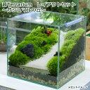 (観葉植物)苔Terrarium レイアウトセット 〜ガジュマルの丘〜 説明書付 北海道冬季発送不可