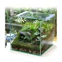 (観葉植物)苔Terrarium レイアウトセット 〜moss green〜 説明書付