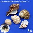 (海水魚 貝殻)やどかりの貝殻 Sサイズ おまかせ(殻口10〜20mm)(5個入り)(形状おまかせ)