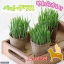 (観葉植物)猫草 ネコちゃん人気No.1(ペットグラス) 直径8cmECOポット植え(無農薬)(2ポットセット) 猫草