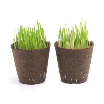 (観葉植物)ペットグラスと斑入りペットグラスの生牧草のセット ネコちゃんの草 燕麦 直径8cmECOポット植え(無農薬)(各1ポットずつ) 犬のおやつ 北海道冬期発送不可