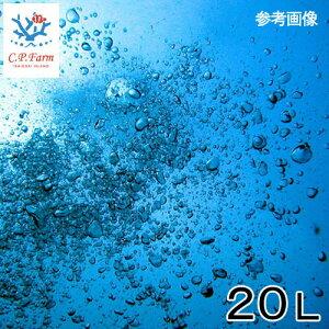 C.P.Farm直送(海水魚)天然海水20L(1個口相当)別途送料海水