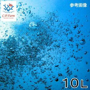 C.P.Farm直送(海水魚)天然海水10L(0.4個口相当)別途送料海水