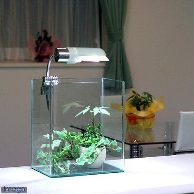 40cm以下の水槽に最適!ピクシースノー【関東当日便】【HLS_DU】