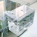 卵胎生魚の産卵に!外掛式産卵飼育ボックス サテライト