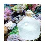 (海水魚)同梱不可 足し水くん テナーボトル 天然海水(海洋深層水) 20リットル 送料無料 航空便不可・沖縄不可