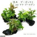 ニッソー 育てる水草の種 ストレートヘアーソイルセット 関東当日便