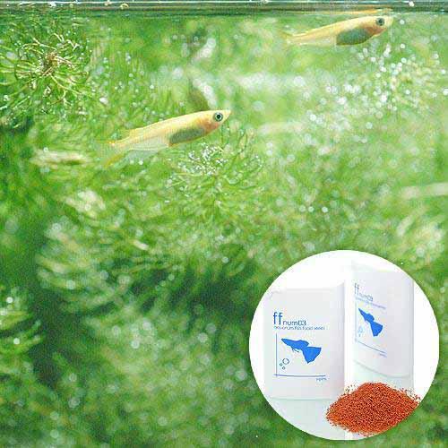 (めだか)ヒメダカ初心者セットヒメダカ(6匹)+小型魚用フードffnum0340ml本州四国