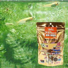 アクア用品2>餌/給餌器>メダカメダカのエサ 産卵・繁殖用 130g 関東当日便