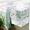 卵胎生魚の産卵に!《S》外掛式産卵飼育ボックス サテライトSサイズ【関東当日便】【HLS_DU】