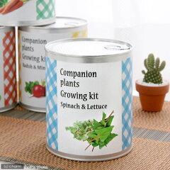 1缶で2種類の仲良し植物が育ちます!コンパニオンプランツ栽培キット サラダほうれん草&リー...