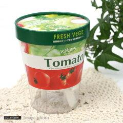 摘みたて野菜をご家庭で!フレッシュ ベジ ミニトマト【春夏限定】【関東当日便】