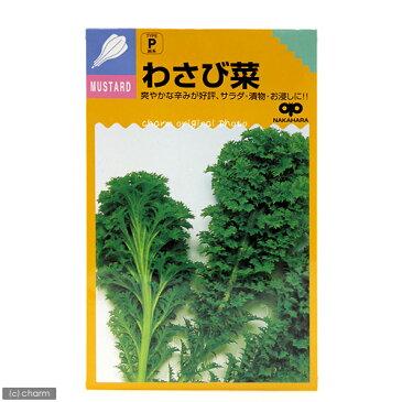 野菜の種 わさび菜の種 家庭菜園 関東当日便