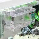 メイン水槽内を広く使える外掛式外掛式産卵飼育ボックス サテライト Lサイズ 【あす楽対応_関...